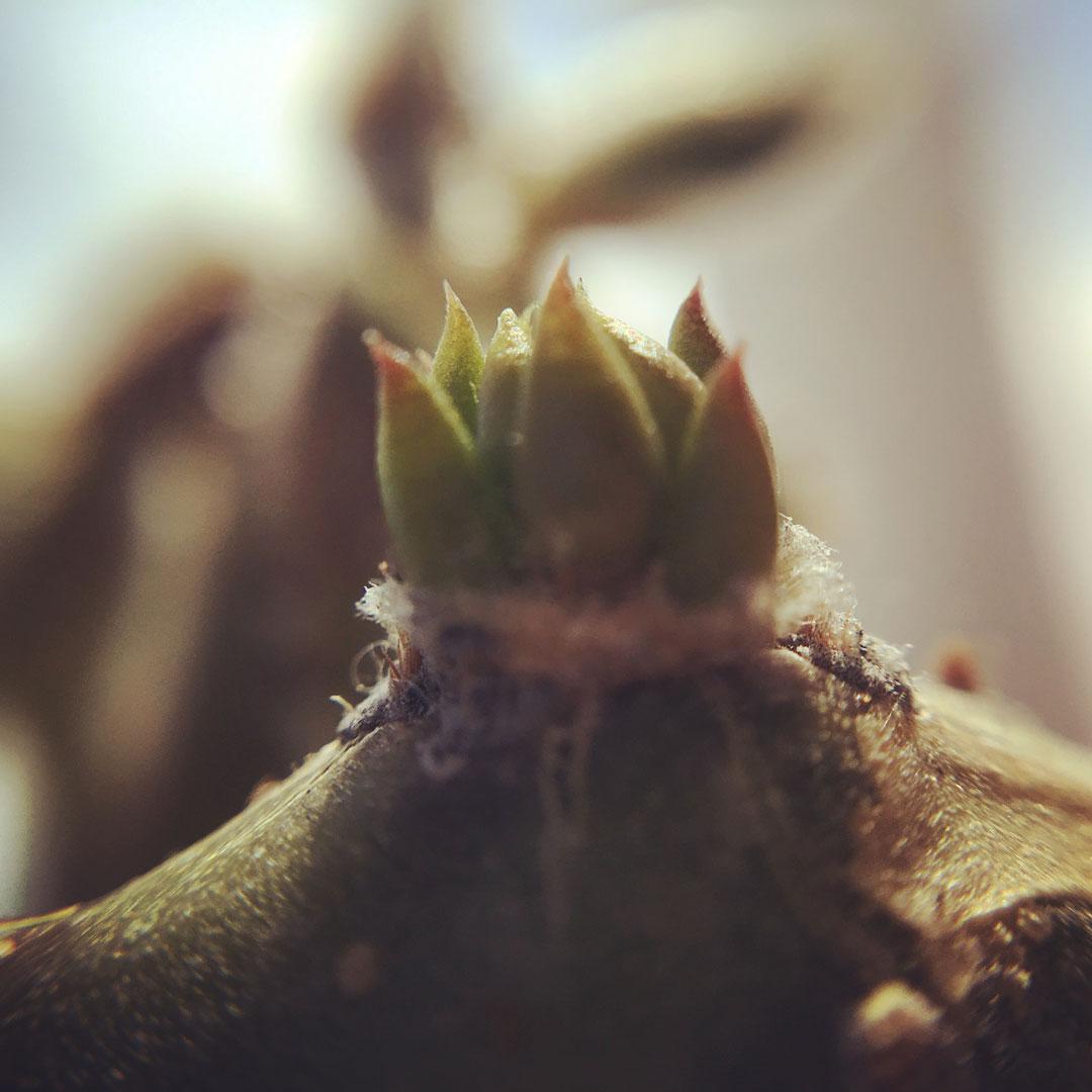 Cactus Macro Photograph 0